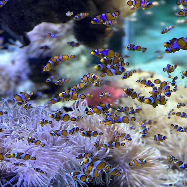 Seattle Aquarium (1)