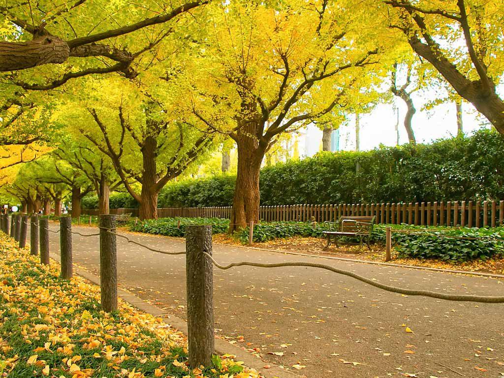 Best Fall Foliage Destinations