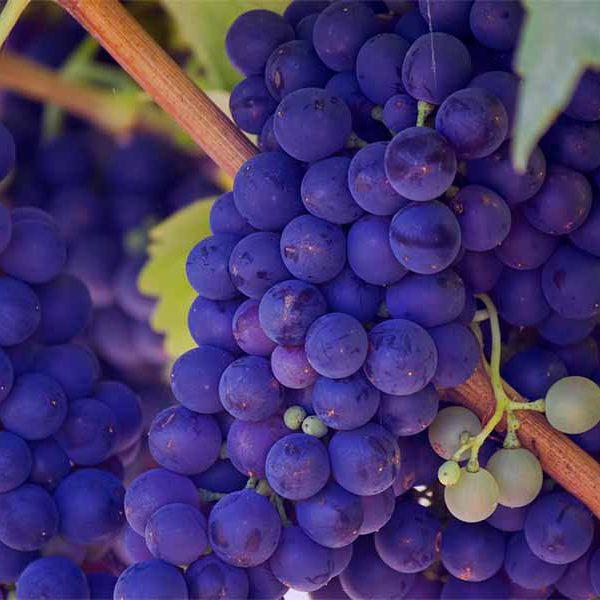 Scottsdale Wine Trail copy