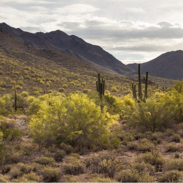 The McDowell Sonoran Conservancy